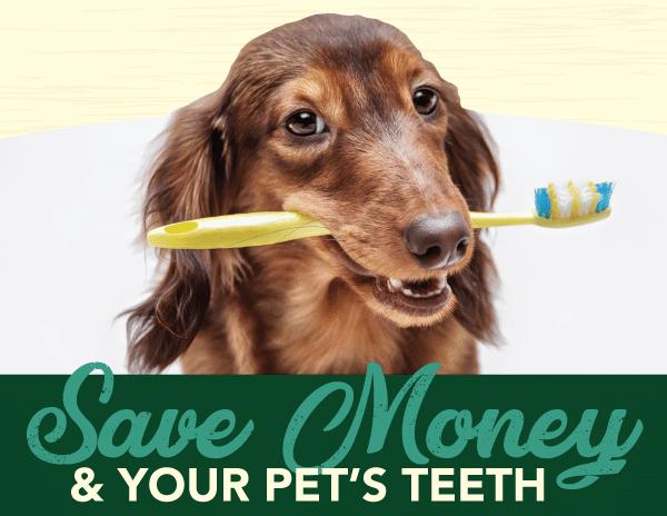 Save Money & Your Pet's Teeth