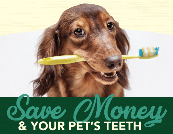 Save Money & Your Pet's Teeth